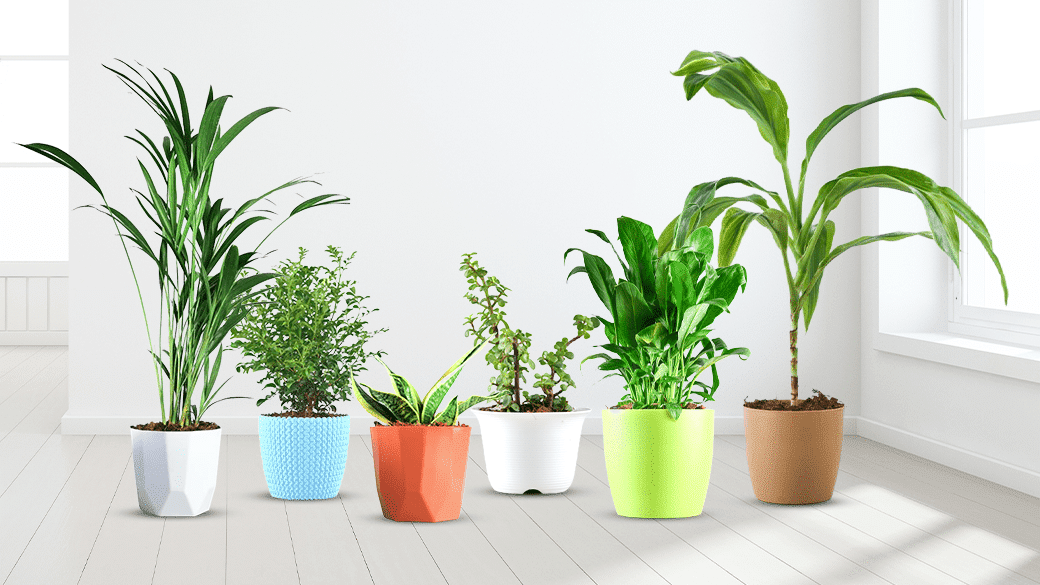 Humidifying Plants to Beat the Dry Indoor Air