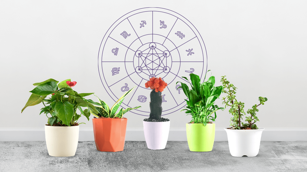 Plants Best Suited With Your Zodiac Sign