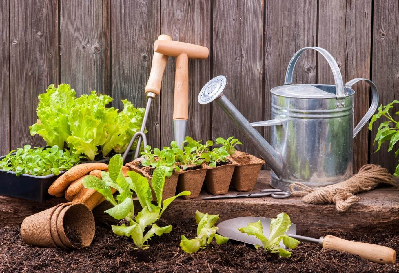 Gardening To Help Relax Your Mind During Covid