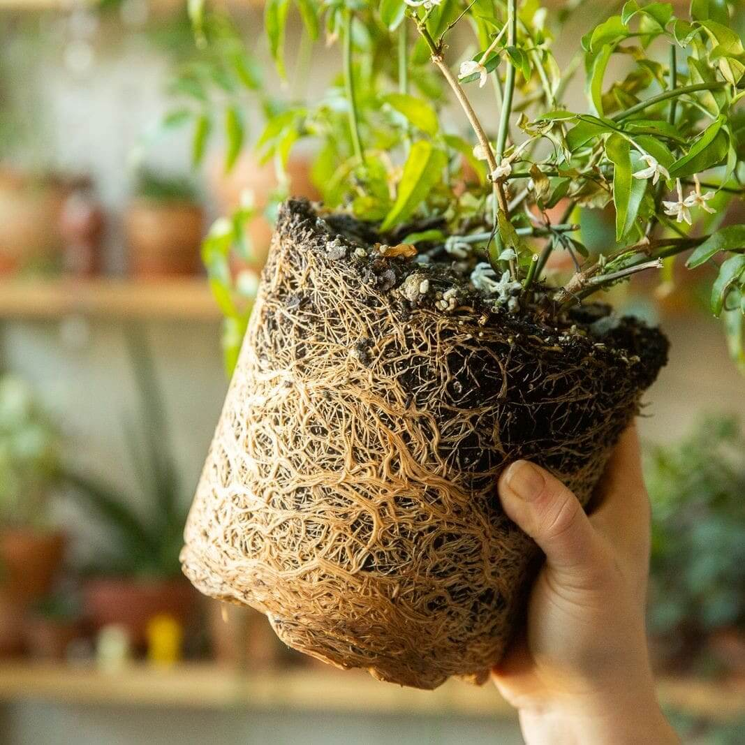 How to Repot Plants Safely