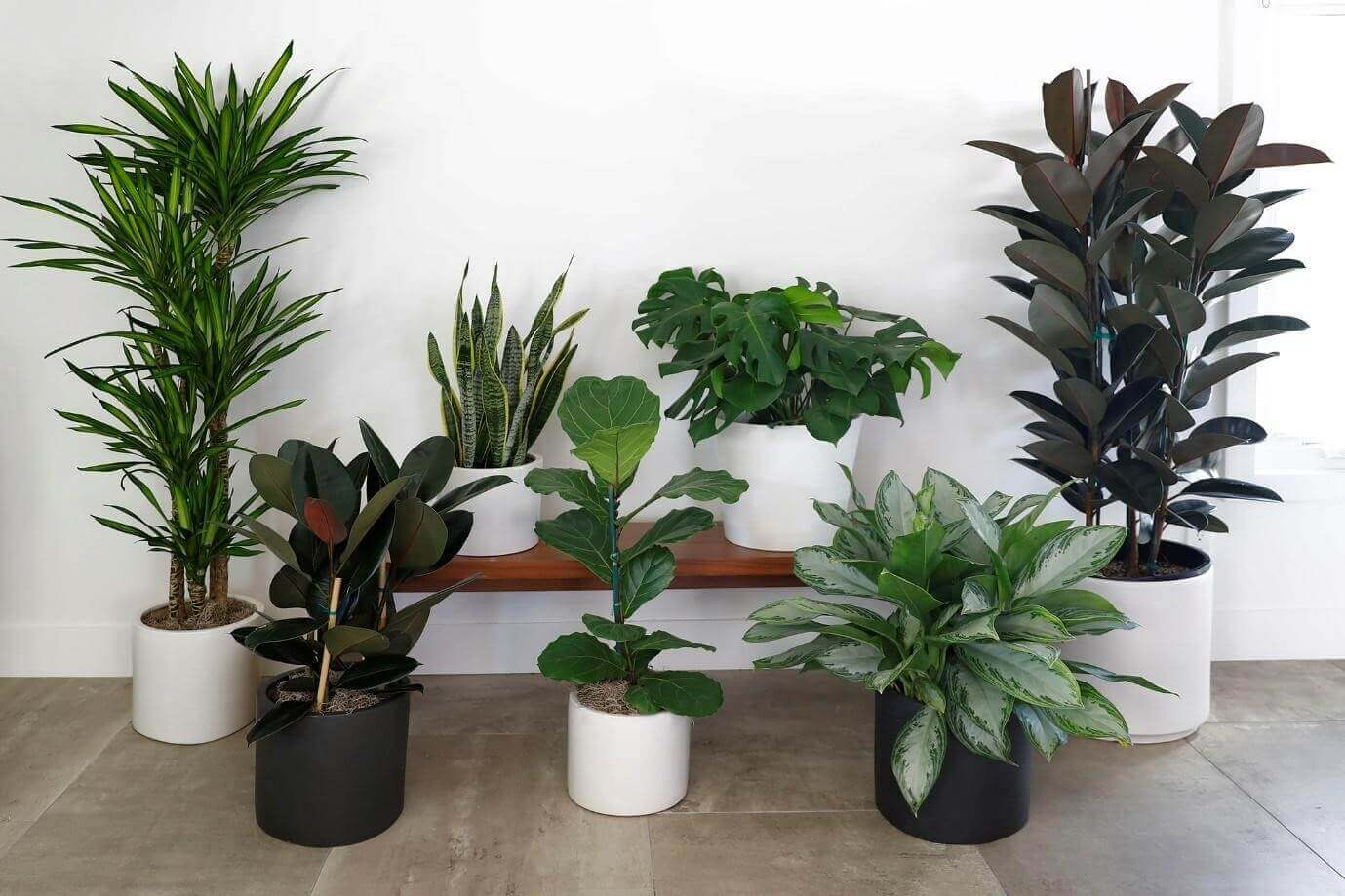 Tips For Styling Plants in Your Home and Garden